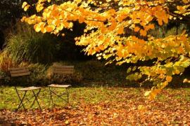 A Guide to Autumn Tree Care