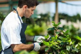 Hiring a Gardener for All Your Garden Maintenance Needs in Fulham