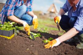 Understanding The Soil In Your Garden In Hounslow