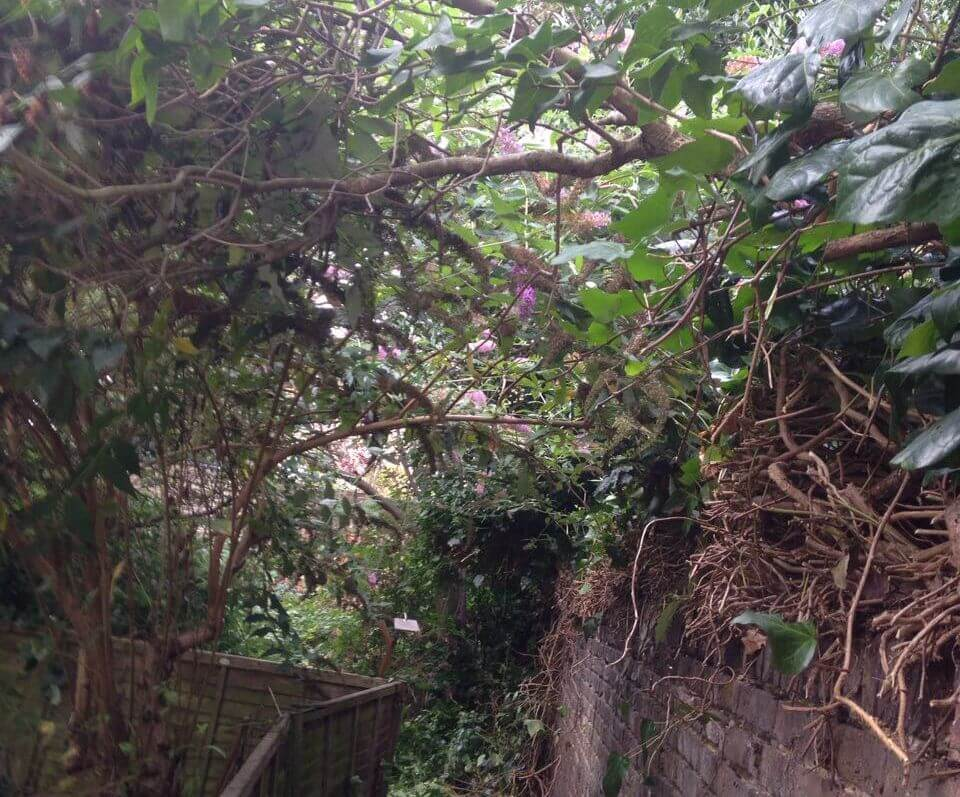 gardening maintenance companies in Southall