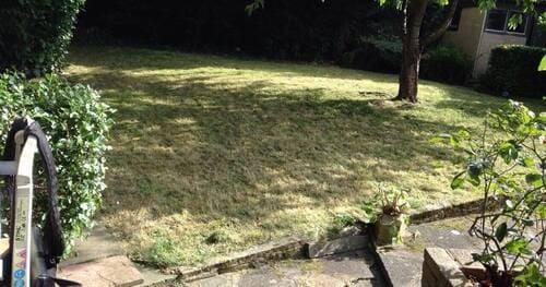 Belgravia garden cutting SW1X