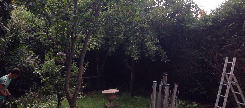 Bermondsey garden cutting SE16