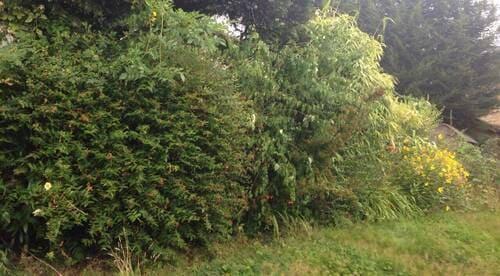 Brixton garden cutting SW9