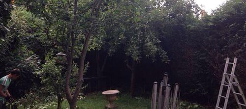 W1 garden tidy ups