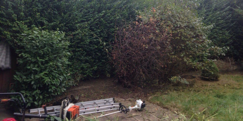 Cranford garden design service TW5
