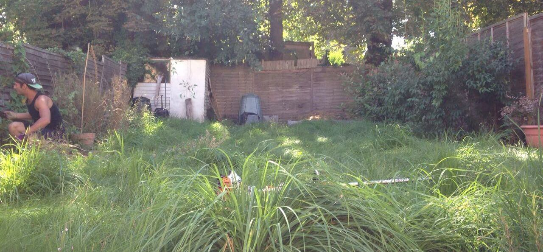 SE1 garden tidy ups