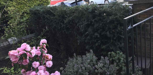 Feltham garden cutting TW13