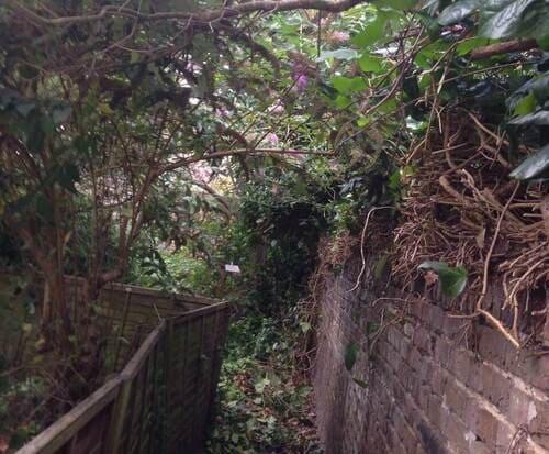 Fulham garden cutting SW6