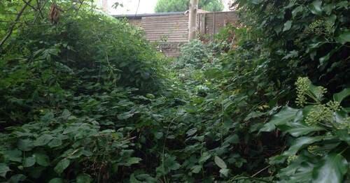 Hampstead Gdn Suburb gardening services N2