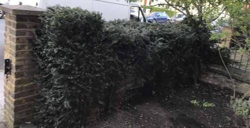 Hoddesdon garden cutting EN11