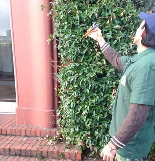 W11 gardener service Holland Park