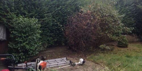 Kingston Vale garden cutting SW15