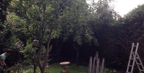 W5 garden tidy ups