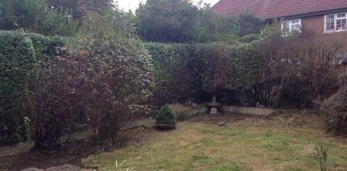 Lewisham garden cutting SE13