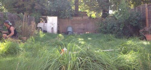 Nine Elms garden cutting SW8