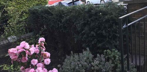 Southwark garden design service SE1