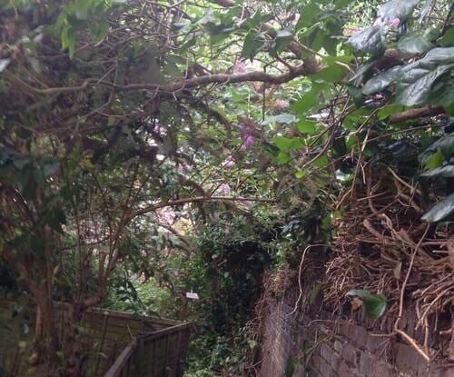 Tufnell Park garden design service N7